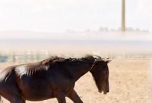 Horse tripping.horse choking
