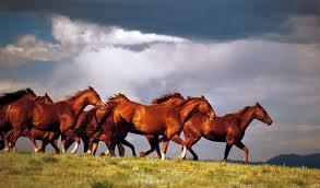 horses running in storm