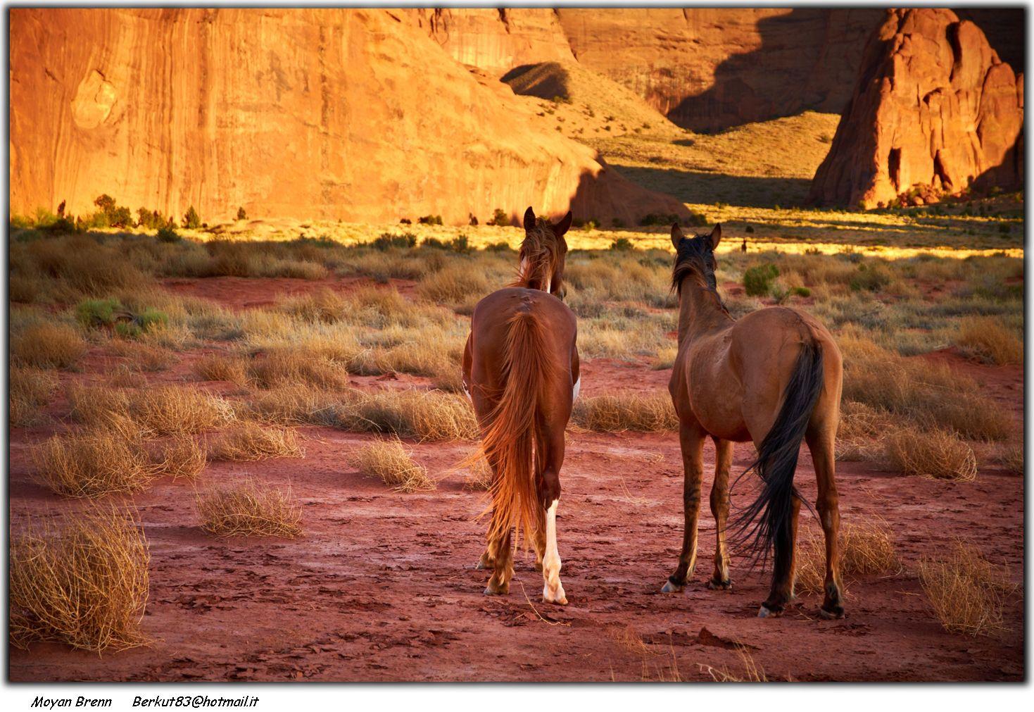 horsesvalleyccby2.0moyanBrenn