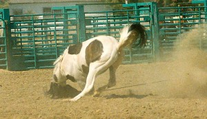 head driven into the dirt horse tripping