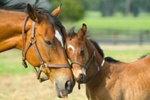 horses_hugging