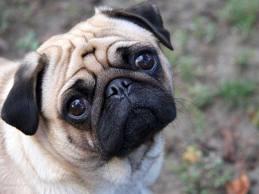 Goddard's Law dog